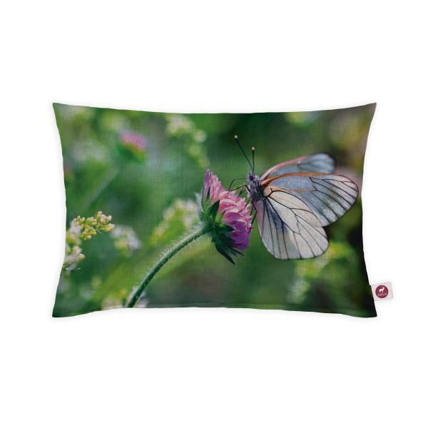 Motivkissen 30x20cm - Schmetterlingsblume
